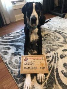 Black dog with certificate - Dog Training