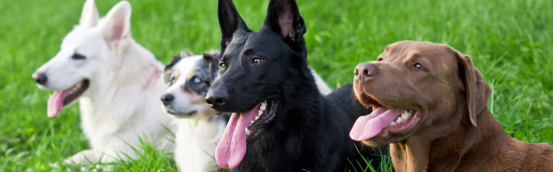Dogs lying in grass - Positive reinforcement dog training