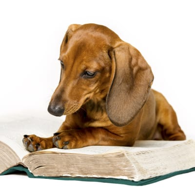 Dog reading book - Free Dog Training Articles