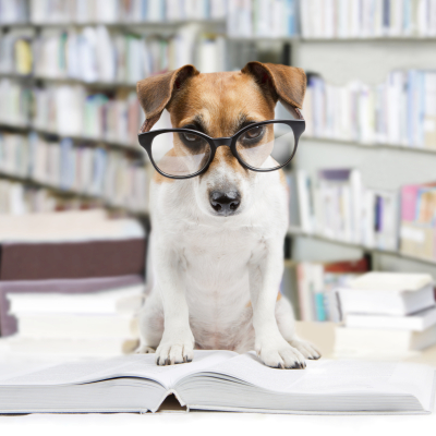 Dog wears glasses - Positive Reinforcement Dog Training