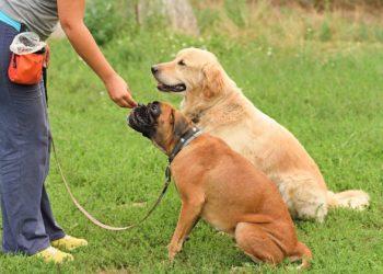 Spring into Dog Training