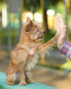 Dog Gives Paw - Group Dog Training Classes