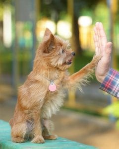 Dog Training Classes in Downers Grove and Lombard