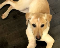 "Lise says Dog Gone Good is a ""first-rate training experience"" after doing an in-home training program with her dog Hazel"