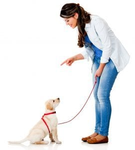 Woman training Labrador puppy - Puppy Training