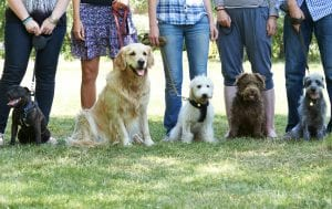 Group of dogs - Group Dog Training Classes