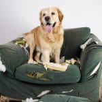 Dog chews couch - Dog Training Seminar