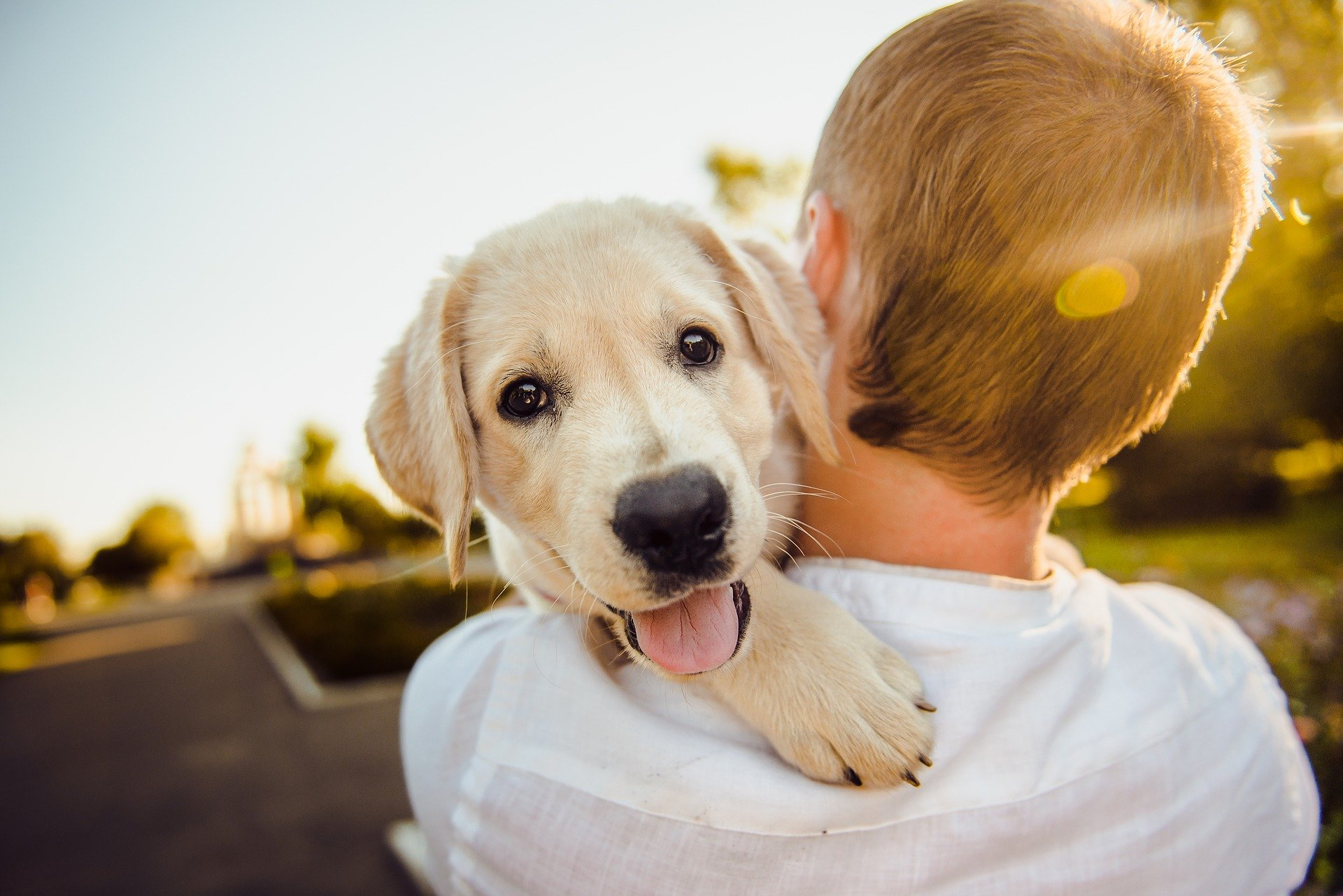 Boy holding dog - Socialize your puppy