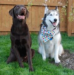 Two dogs sit in yard - In Home Dog Training