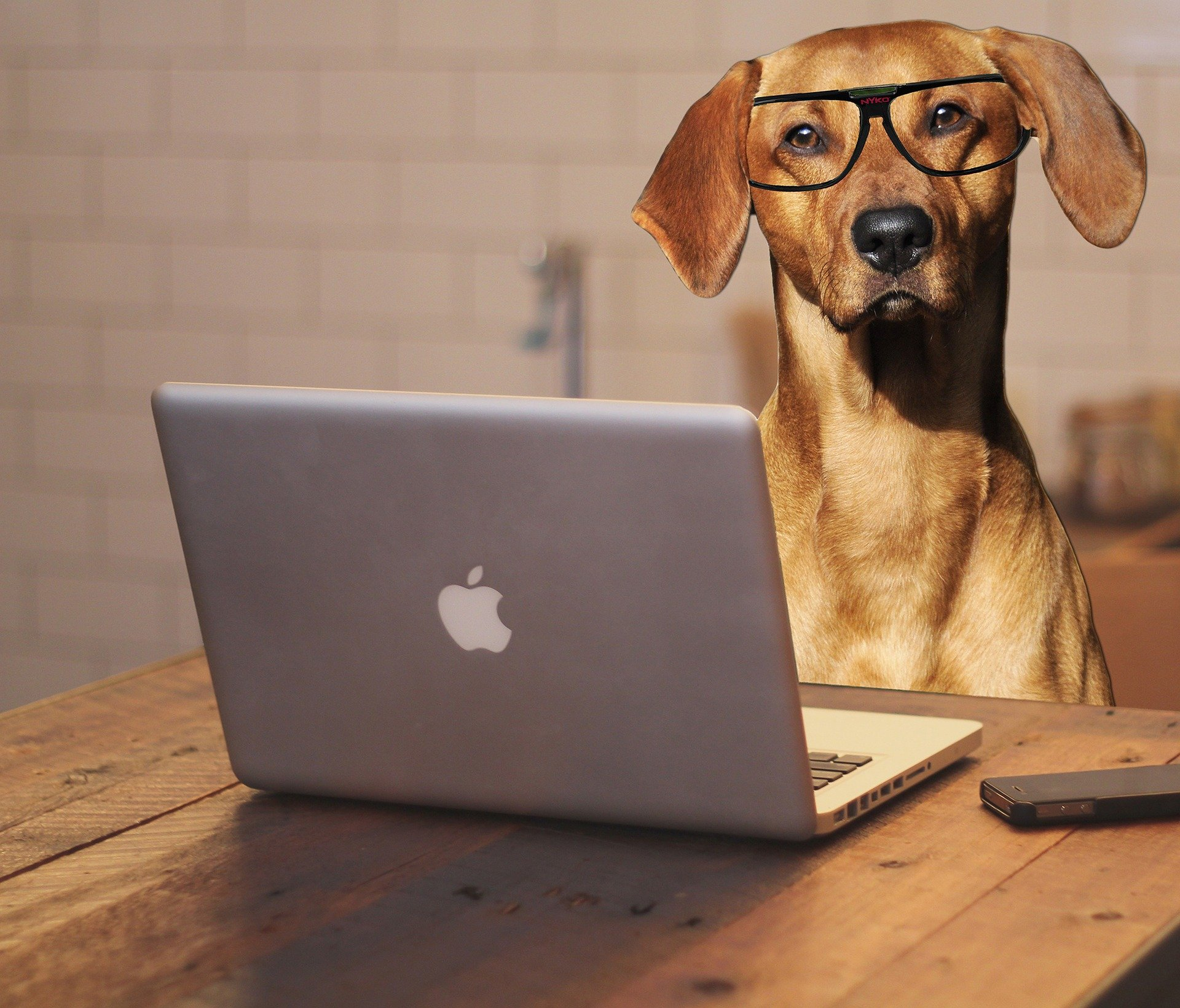 Dog with a computer - Online Dog Training Video Sessions