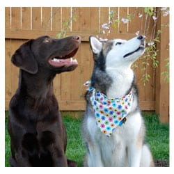 Positive Reinforcement In-Home Dog Training and Puppy Training