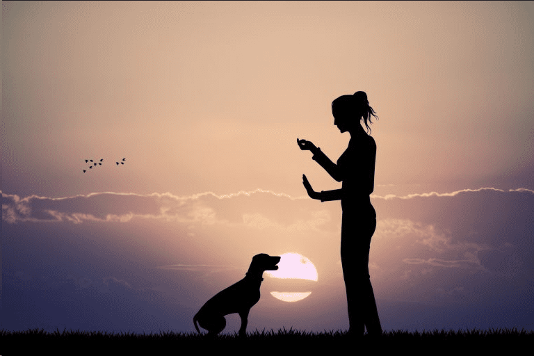 Woman trains dog at sunset - professional dog training business
