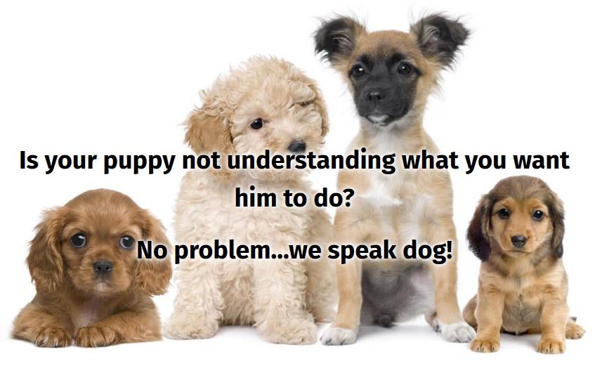 Four cute puppies sitting - Positive reinforcement dog training
