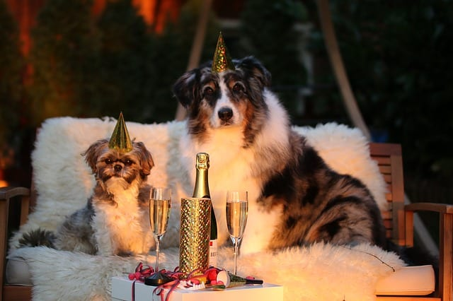 Two dogs with party hats - Happiness with dog training