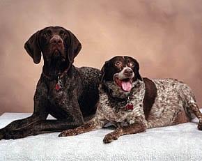 In Home Dog Training in Burr Ridge, Clarendon Hills, Darien, Hinsdale, Homer Glen, Lemont, Lombard, Plainfield, Western Springs